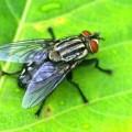 【夢占い】夢の中の虫は運気上昇の意味も?【体から虫が!?】